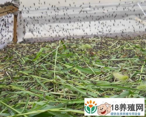 """蚂蚱养殖棚里找到""""钱途""""(2)"""