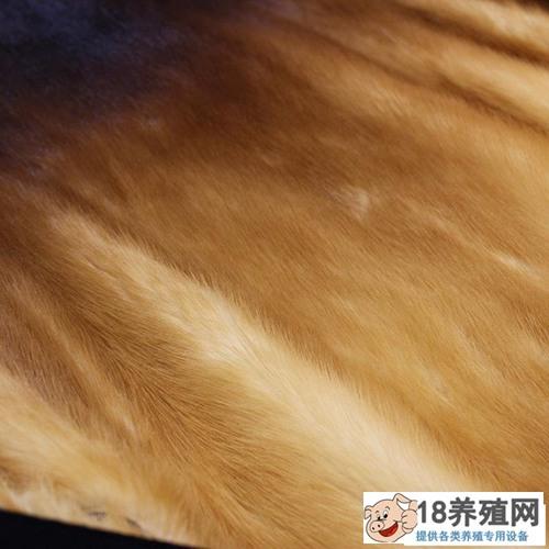 水貂皮草如何清洗(2)