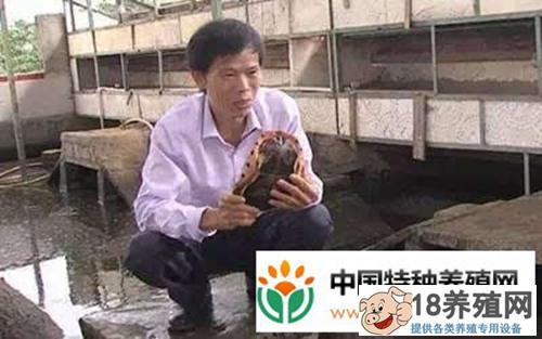 龟痴陈明球驯养乌龟年入2千万的致富经