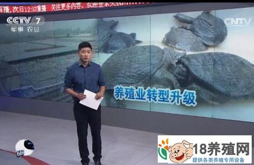 浙江桐庐县龟鳖养殖停养转型,怎样才能减少养殖户的损失