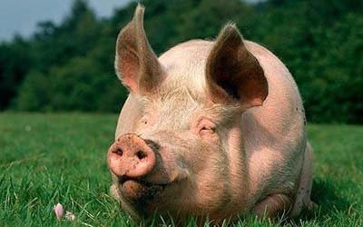 统计局:6月下旬,23种生产资料价格上涨,生猪上涨5.3%