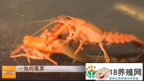 黄鳝、泥鳅、小龙虾相聚谁更胜一筹