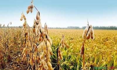 《CBOT大豆周刊》:大豆期货价格飙升,受产地天气影响,供应紧张,创下七年新高