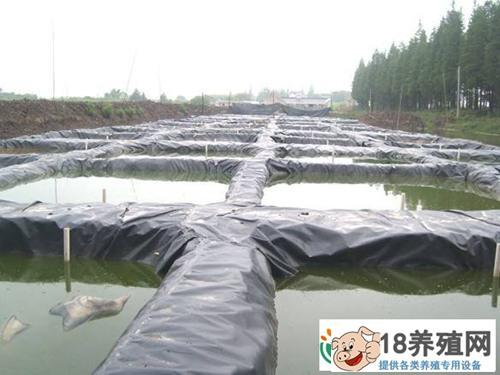 泥鳅怎么养殖 大棚养殖需要做好哪几个方面