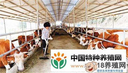 牛粪发酵养殖蚯蚓 牛场多赚20万