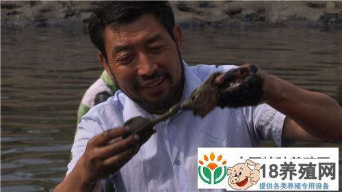 山东菏泽赫广武养甲鱼赚了钱出了名