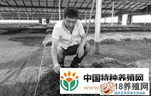 每斤蚯蚓卖15元 养一亩纯赚五六万