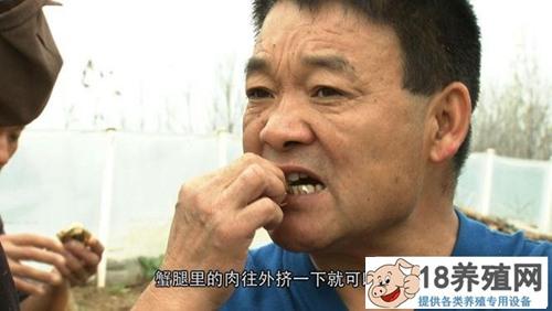 """寇元钦""""魔咒""""泉里养螃蟹,3个月要捞2000万!(3)"""