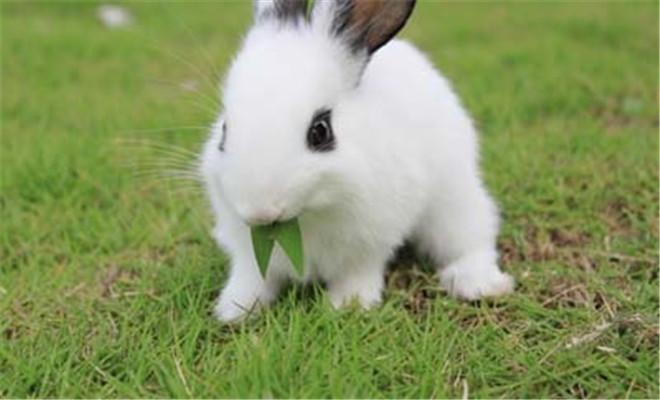 断奶兔的饲养技巧