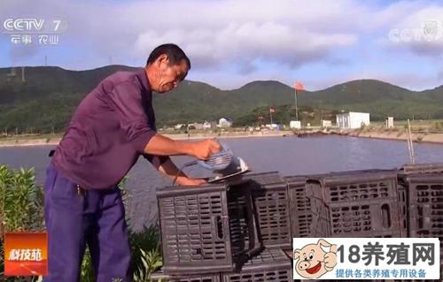 杜志方养螃蟹用废旧塑料筐挣了100万!
