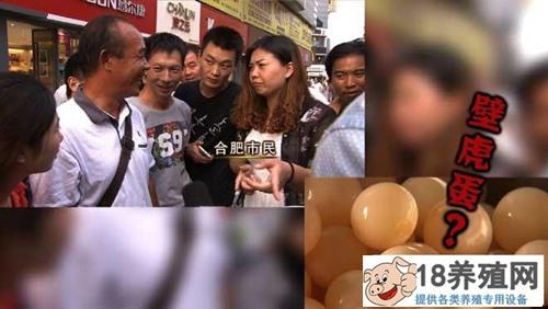 安徽寿县崔伯昌养甲鱼卖甲鱼蛋年销售额六百万(2)