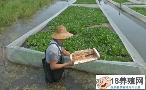 水蛭养殖每亩投入多少钱,亩产效益是多少?