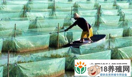 抵御黄鳝养殖风险 还需抱团发展