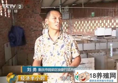 重庆竹鼠大王刘勇 新型农业经营主体纪事
