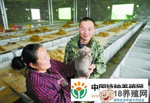 江永县何少平:竹鼠仿生态养殖年产值过百万