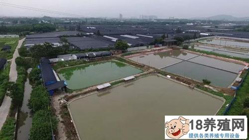 借来18万,90后沈文昌建成如今年销6000万的龟鳖王国!(2)