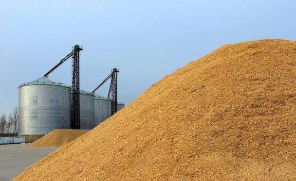 """玉米价格再次下跌?三大坏消息""""接踵而来""""!三月份的时候,粮商的价格好吗?"""