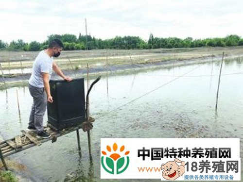 小伙跨行养殖台湾鳗鳅,一季一亩纯利润有1万多元!