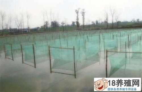 中华沙鳅人工养殖技术