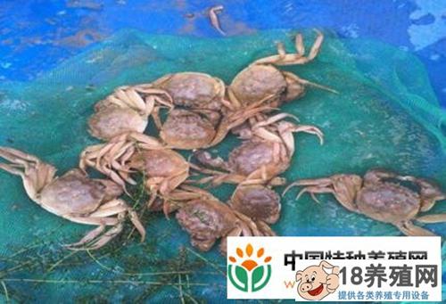 早春河蟹养殖管理要点
