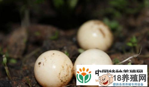 如何自制孵化箱孵化甲鱼蛋(2)