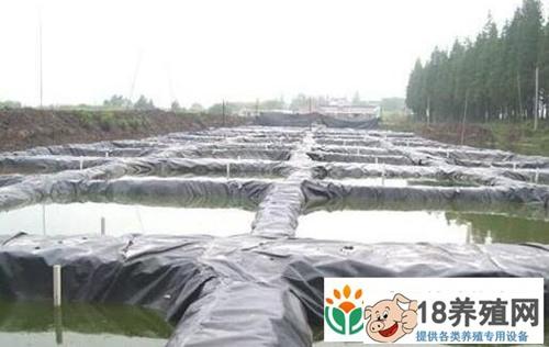 无土养殖泥鳅准备和过程