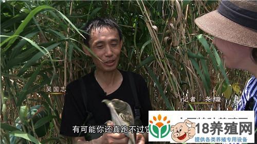 江苏丹阳吴国志用牛肉养甲鱼与众不同