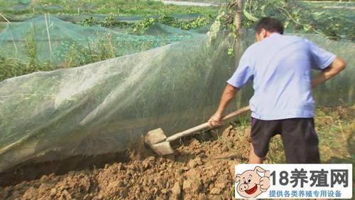 哈尼梯田养泥鳅 稻鳅共作效益好(3)