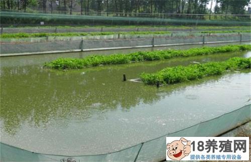 泥鳅养殖致富经 四大要点成就泥鳅养殖创业