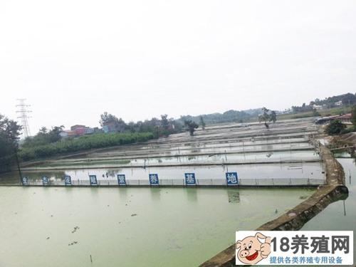 养殖泥鳅场地是怎么建设