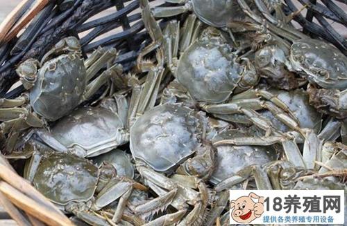 大闸蟹多少钱一斤?如何辨别真正的阳澄湖大闸蟹?