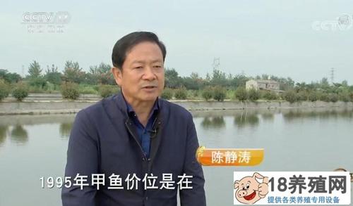 陈静涛仿野生养甲鱼 绝地翻身实现年销6000多万元