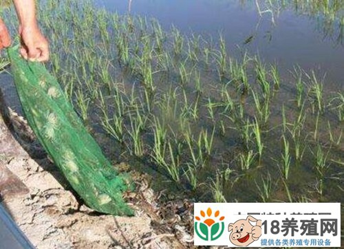 陕西榆林:稻田养蟹成农民致富新门路