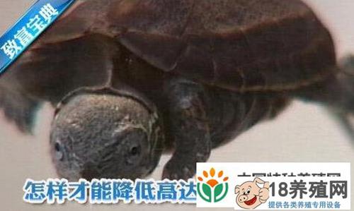 怎么养龟:降低乌龟死亡率有高招