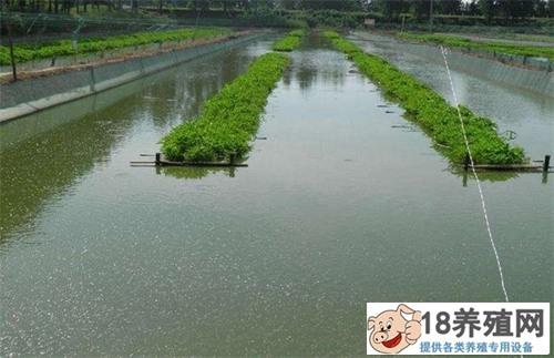 泥鳅养殖模式方法
