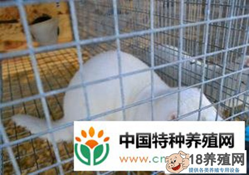 水貂养殖主要的营养需要(2)