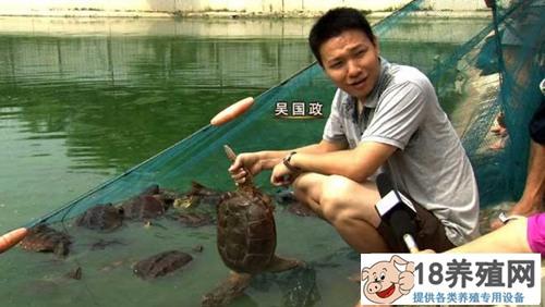 海归吴国政养龟不走寻常路年赚千万元