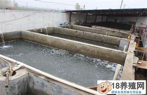泥鳅的养殖方法和利润