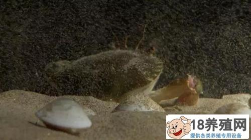共享池塘 小贝不再怕大蟹(2)