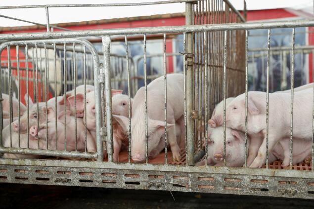 中国分为五个地区防控动物疫病,生猪养殖流通模式将进行调整