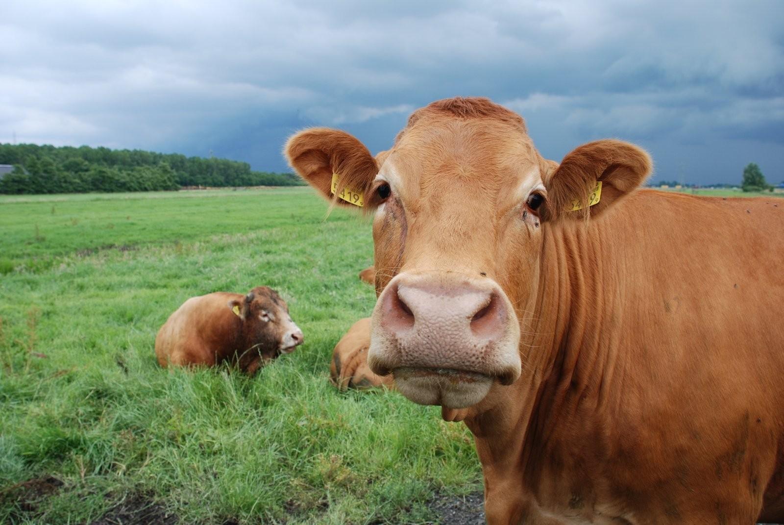 快速育肥牛的最佳时机