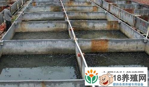 牛蛙养殖及水质管理常识_水产养殖(养牛蛙的技巧)