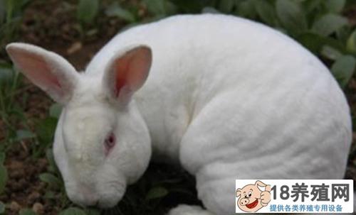 养殖兔子爱吃什么草?