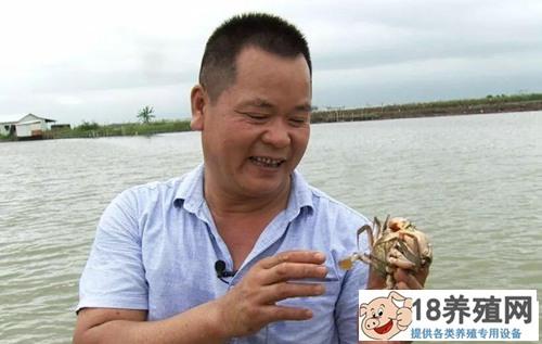 郑炳才养出黄油蟹,24年圆一个金色蟹梦