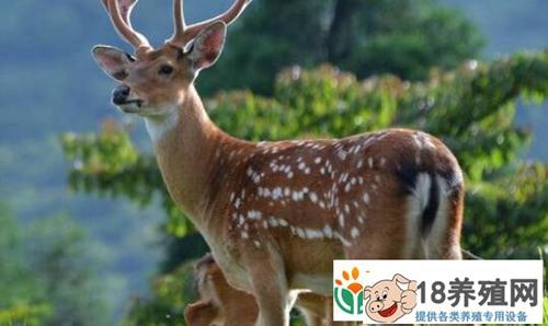 2020年养鹿国家给补贴吗有什么条件?