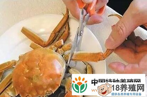 大闸蟹究竟怎么吃才正确(图解)?