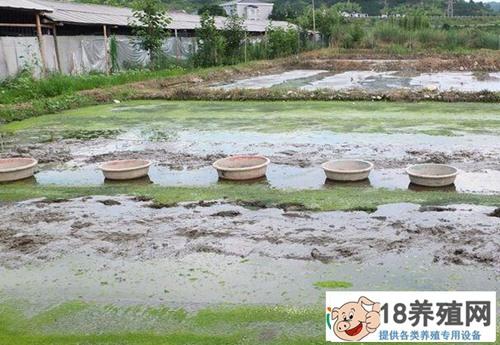 水蚯蚓养殖前景好效益高亩收入1.2万元