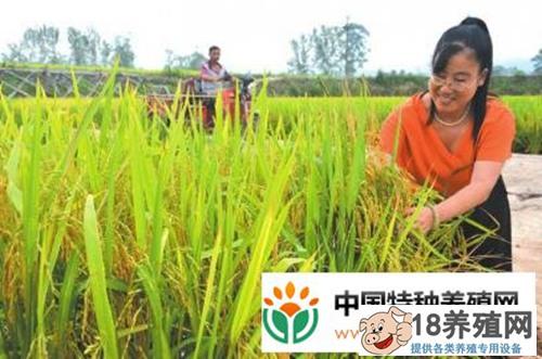 稻虾立体种养,每亩收益7000元!
