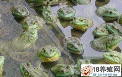 2020年牛蛙的收购价格怎么样?