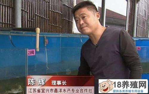 吃河蚬、请虾兵,陈辉绿招养出大闸蟹!